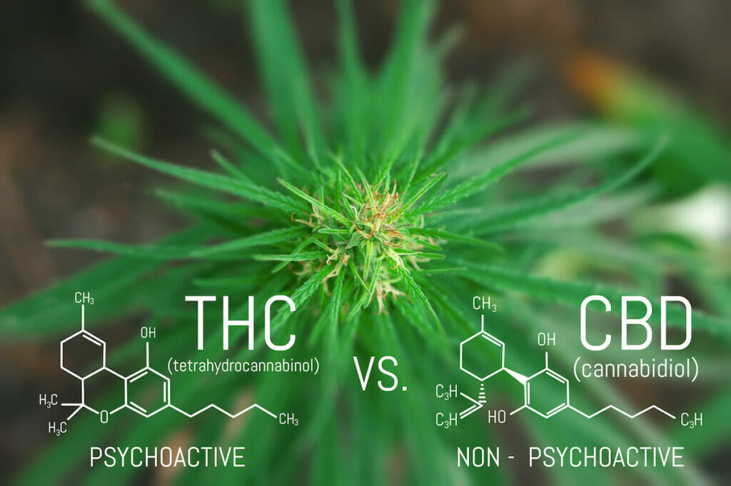 infographic of THC vs CBD with molecular structure and picture of marijuana plant in background